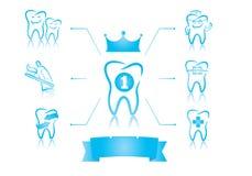Zahnmedizinisches infographics Stockbilder