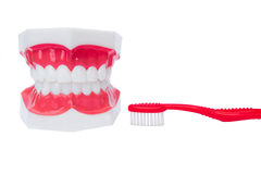 Zahnmedizinisches Zahnbaumuster Stockfotos