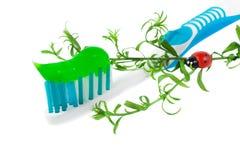Zahnpasta auf dem hellblauen zahnmedizinischen Pinsel getrennt Stockbilder