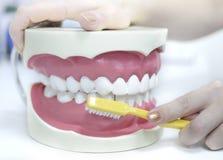Zahnsorgfalt Stockbild
