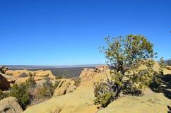 Zahntrieb-Baum, der auf Felsen wächst Stockfoto