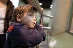 Zainteresowana chłopiec w zoo Zdjęcia Stock