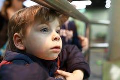 Zainteresowany dzieciak w zoo Zdjęcie Stock
