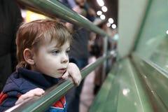 Zainteresowany dziecko w zoo Zdjęcie Stock