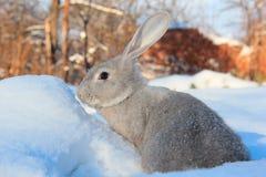 Zając i śnieg Zdjęcia Royalty Free
