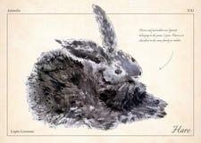 Zając, królik odizolowywał wektor Zając, królik odizolowywał wektorową ilustrację dla książki, karta, artykuły Olej malująca fute ilustracja wektor