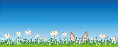 Zajęczy ucho chują w kwiatu Easter łąkowym projekcie royalty ilustracja
