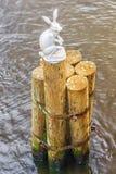 Zajęczy pomnikowy blisko królik wyspa w St Petersburg Obraz Stock