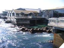 zajrzymy do akwarium Monterey Fotografia Stock