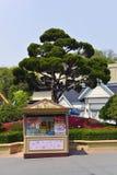Zakładka sklep, Lotte świat, Południowy Korea Obrazy Royalty Free