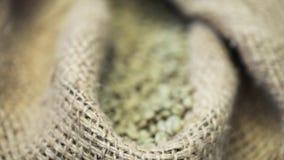Zak met gebraden niet koffiebonen in koffiefabriek Gezoem binnen stock footage