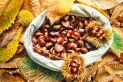 Zak van heerlijke kastanjes met bladeren en schillen Stock Fotografie