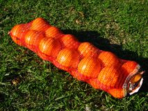 Zak van sinaasappelen Royalty-vrije Stock Foto's