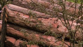 Zaken van het felling van bomen en knipsel en het voorbereiden van het hout De achtergrond van het registreren Grote vrachtwagen