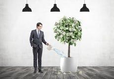 Zakenman die een dollarboom, lampen water geven Royalty-vrije Stock Foto