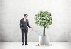 Zakenman die een dollarboom water geeft Stock Afbeeldingen