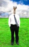 Zakenman met het hoofd van de Struisvogel Stock Afbeelding