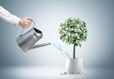 Zakenmans hand die een dollarboom water geven Royalty-vrije Stock Afbeelding
