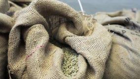Zakken met gebraden niet koffiebonen in koffiefabriek stock footage