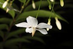 Zakończeń flower&ants zdjęcie stock