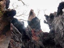 zakończenia inside up burnt korowatą węgiel drzewny teksturę drzewo po pożarniczego d Zdjęcia Royalty Free