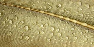 Zakończenia kropla krótkopęd mokry piórko z kroplami Obrazy Stock