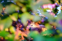 Zakończenia oka piękny ptak z kwiatami, zwierzęca fotografia a obrazy stock