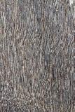 zakończenia texture w górę drewna Obrazy Stock