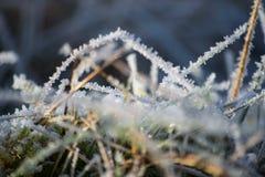 Zakończenia up/Makro- wizerunek lodowi kryształy na ostrzach trawa w zimie zdjęcie stock