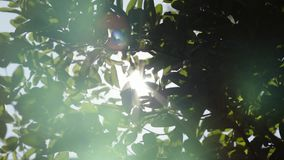 Zakończenia up pieczarki nakrętka z zieloną rośliną w ogródzie zbiory wideo
