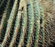 Zakończenie, światło słoneczne i cienie ilustruje Kaktusowych kręgosłupy, fotografia royalty free