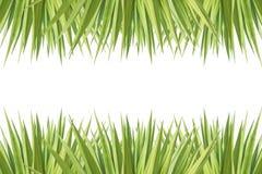 Zakończenie agawy up zielona roślina odizolowywająca na bielu Obrazy Royalty Free