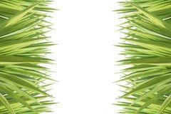 Zakończenie agawy up zielona roślina odizolowywająca na bielu Zdjęcia Royalty Free