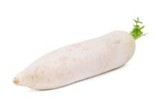 Zakończenie biała rzepa, odizolowywający na białym tle Lat odżywczy warzywa dla zdrowych diet obraz royalty free