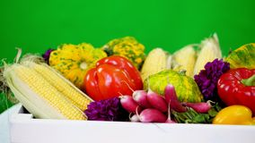 Zakończenie, biały drewniany pudełko z żniwem, różni świezi warzywa, kukurudza, pieprz, rzodkiew, zucchini, patissons Na zbiory