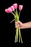 Zakończenie częściowy widok mężczyzna mienia menchii tulipany na czerni Zdjęcie Royalty Free