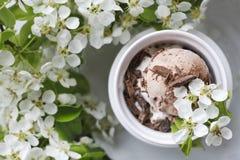 Zakończenie czekoladowy lody w białym pucharze otaczającym piękną kwiatonośną jabłonią rozgałęzia się Fotografia Stock