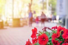 Zakończenie czerwień up kwitnie na zamazanym tle nowożytna ulica w Zdjęcie Stock