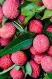 Zakończenie czerwone świeże Lychee owoc Fotografia Stock