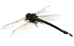 Zakończenie dragonfly Fotografia Royalty Free