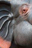 Zakończenie, drewniani cyzelowanie słonie Obrazy Royalty Free