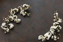 Zakończenie fotografia Piękne białe Kwiatonośnej wiśni gałąź Odgórny widok, pojęcie dla Macierzystego ` s dnia, poślubia, zobowią Zdjęcie Royalty Free