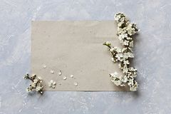 Zakończenie fotografia piękni biali kwitnienie kwiaty czereśniowe gałąź na kawałku papieru na popielatym tle Odgórny widok Zdjęcie Royalty Free