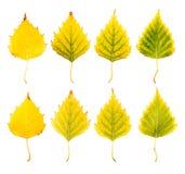 Zakończenie fotografia przód i zadek jesienny więdnąć Obraz Stock
