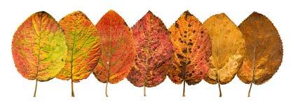 Zakończenie fotografia przód i zadek jesienny więdnąć Zdjęcia Stock