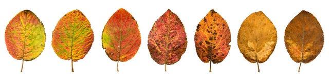 Zakończenie fotografia przód i zadek jesienny więdnąć Zdjęcie Royalty Free