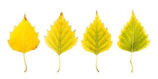 Zakończenie fotografia przód i zadek jesienny więdnąć Obrazy Stock