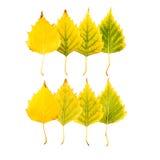 Zakończenie fotografia przód i zadek jesienny więdnąć Obrazy Royalty Free