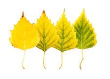 Zakończenie fotografia przód i zadek jesienny więdnąć Obraz Royalty Free