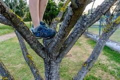 Zakończenie iść dziecka ` s iść na piechotę na drzewie buty w plenerowym akcie zdjęcie stock